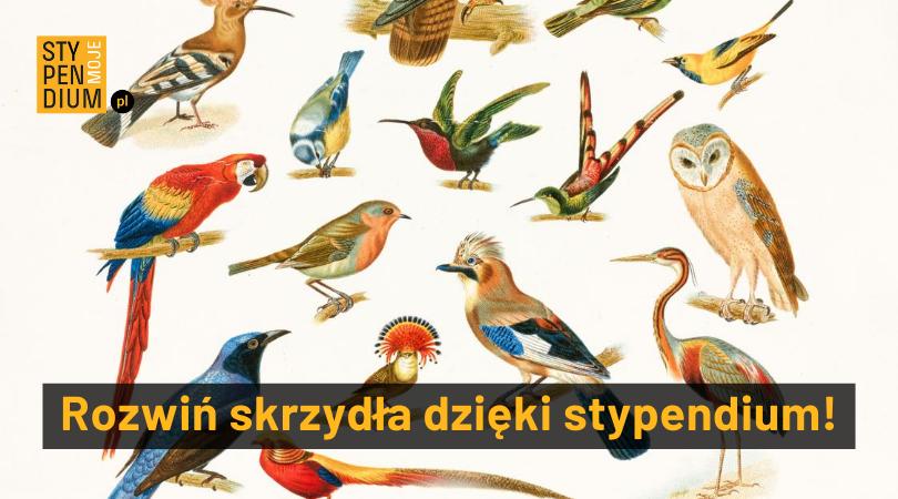 Różne gatunki ptaków na białym tle. Napis: Rozwiń skrzydła dzięki stypendiom.