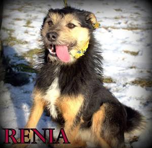 Renia [300x292]
