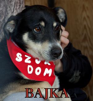 Bajka [300x327]