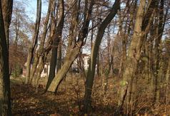 Park podworski w Kołacinie - założony II poł. XIX w.