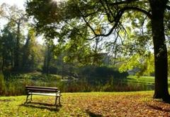 Zdjęcie dobrzyckiego parku.
