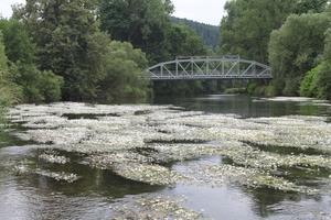 rzeka Bóbr Nielestno