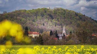 Wleń w rzepaku. W oddali m. in. zamek i kościół we WleniuFot. P. Zatylny