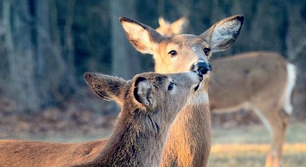 polowanie (link otworzy duże zdjęcie)