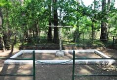 Masowe groby straconych w lesie Kosówka