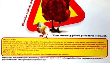 Plakat informacyjny o ptasiej grypie