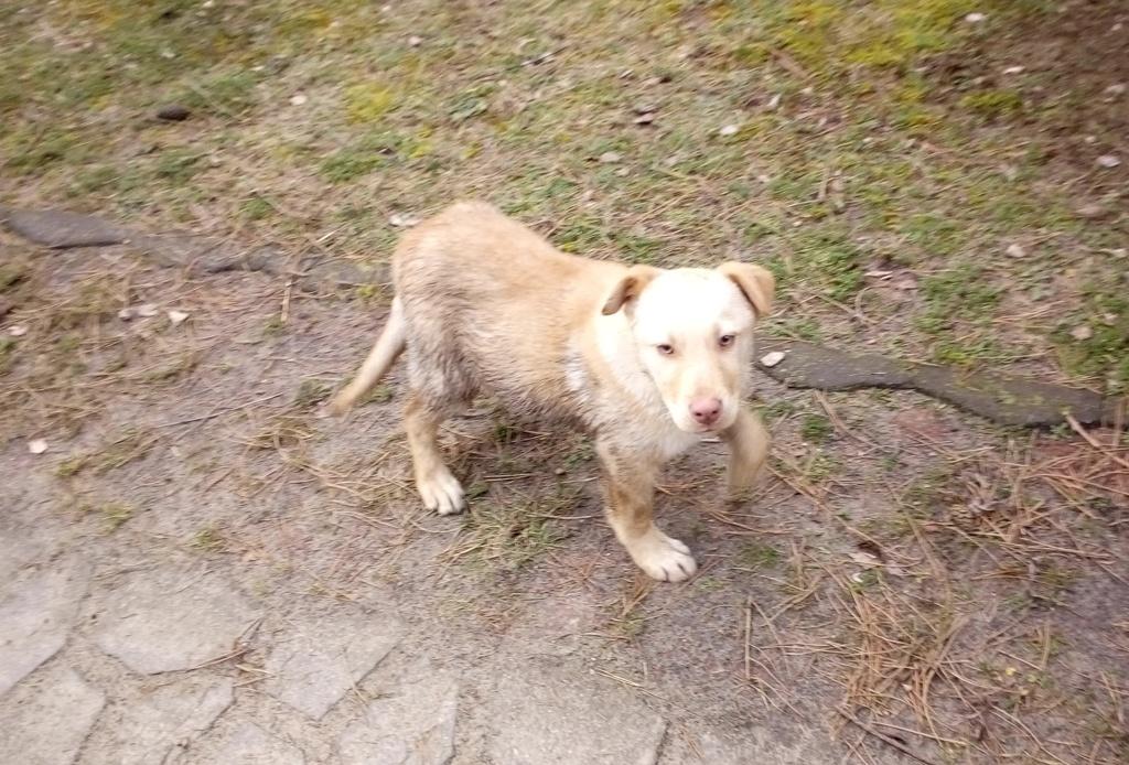 Znaleziony pies (link otworzy duże zdjęcie)