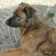 Szukamy właściciela psa (link otworzy duże zdjęcie)
