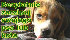Akcja bezpłatnego czipowania zwierząt