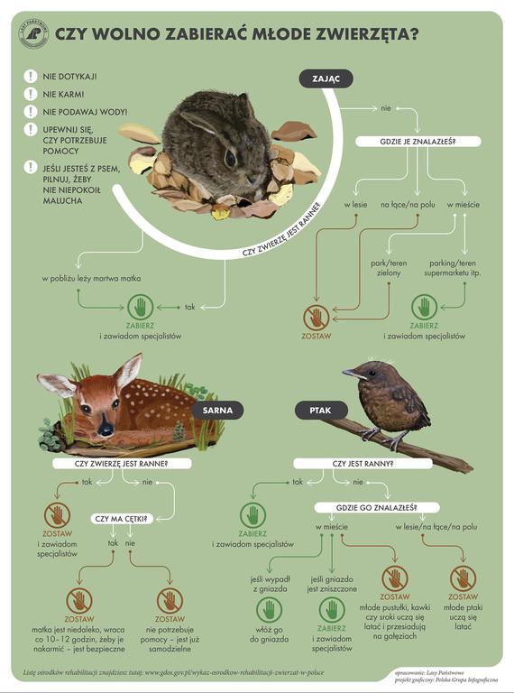 Nie zabieraj z lasu dzikich zwierząt artykuł (link otworzy duże zdjęcie)