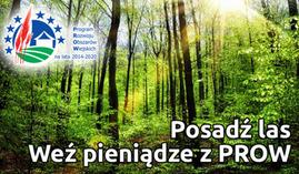 Posadź las weź pieniądze z prow