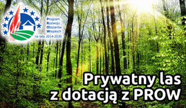 Dotacja na las