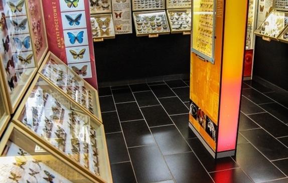 Okazy w Muzeum Motyli.