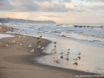 Plaża i Morze Bałtyckie u brzegu którego znajduje się kilkanaście mew.