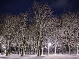 Drzewa pokryte warstwą śniegu przy Ośrodku Przygotowań Olimpijskich Cetniewo we Władysławowie.