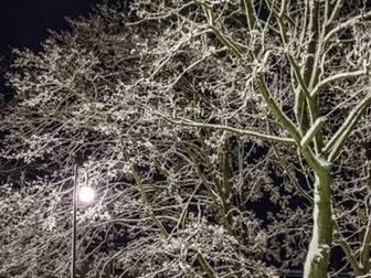 Drzewa przy Alei Żeromskiego pokryte śnieżnym puchem.