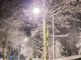 Drzewa przy Alei, podświetlone lampą, pokryte śniegiem.