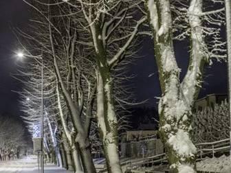 Drzewa wzdłuż Alei pokryte z jednej strony śniegiem.
