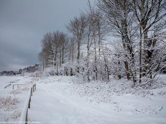 Las pokryty pokrywą śnieżną.