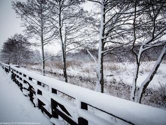 Fragment pomostu i widok z niego na lasek i roślinność pokrytą śnieżną warstwą na skwerze nad zat