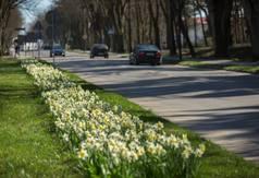 Kwiatowe dywany przyozdobiły Władysławowo