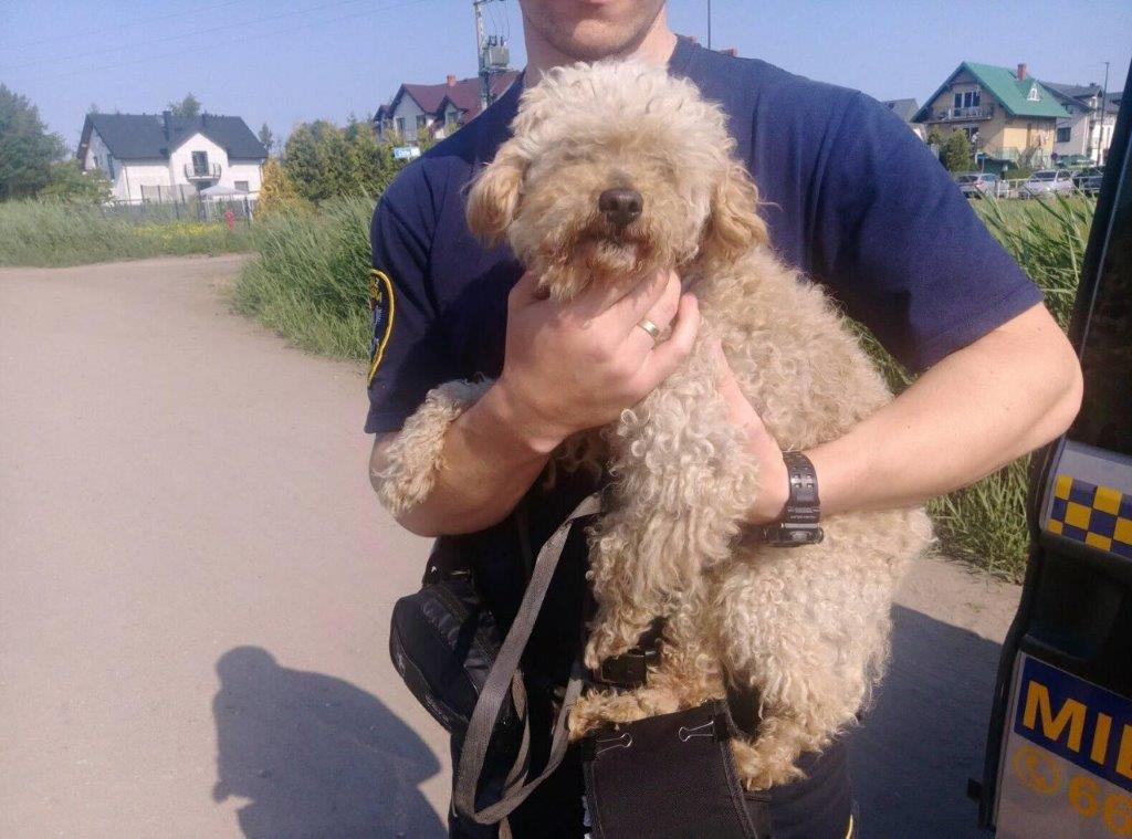 Znaleziona psa w Karwi (link otworzy duże zdjęcie)