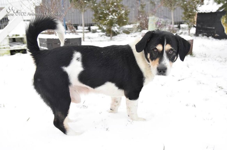 Pies znaleziony w lesie pomiędzy Karwią a Jastrzębią Górą (link otworzy duże zdjęcie)