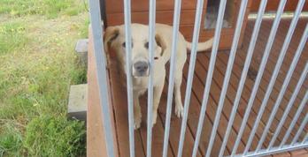 Znaleziono psa we Władysławowie