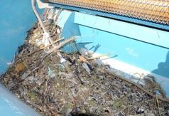 Odpady zebrane przez maszynę do oczyszczania plaży w Chałupach