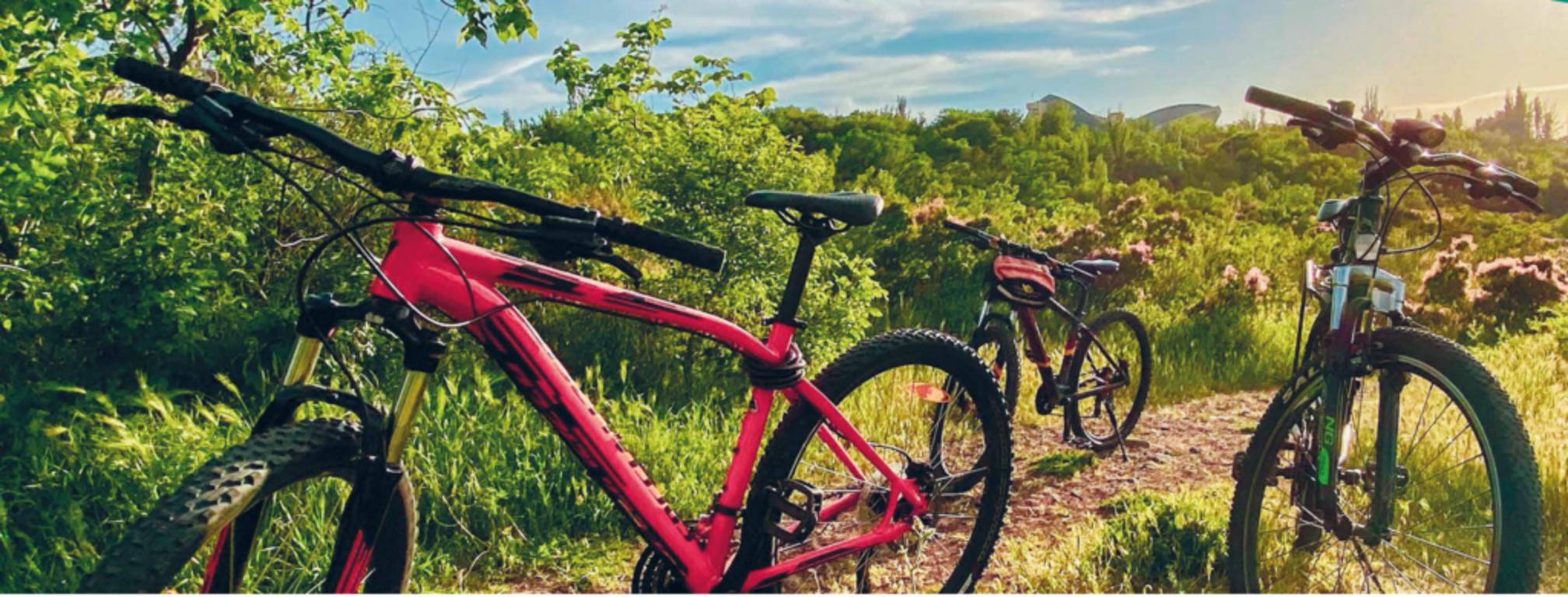 Grafika rowery (link otworzy duże zdjęcie)