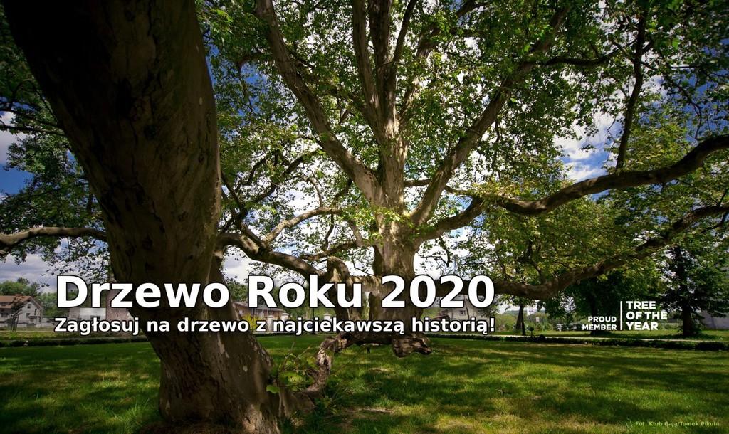 Grafika Konkurs Drzewo Roku 2020 (link otworzy duże zdjęcie)