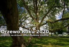 Grafika Konkurs Drzewo Roku 2020