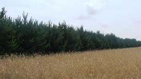 W powiecie szydłowieckim przybywa lasów