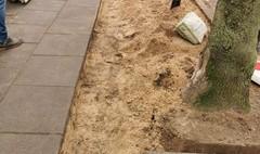 Zdjęcie odbrukowywania mis drzew
